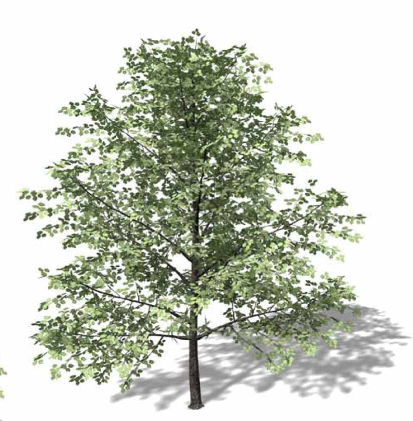 3D AutoCAD trees, palms, papaya, banana blocks etc  - Autodesk