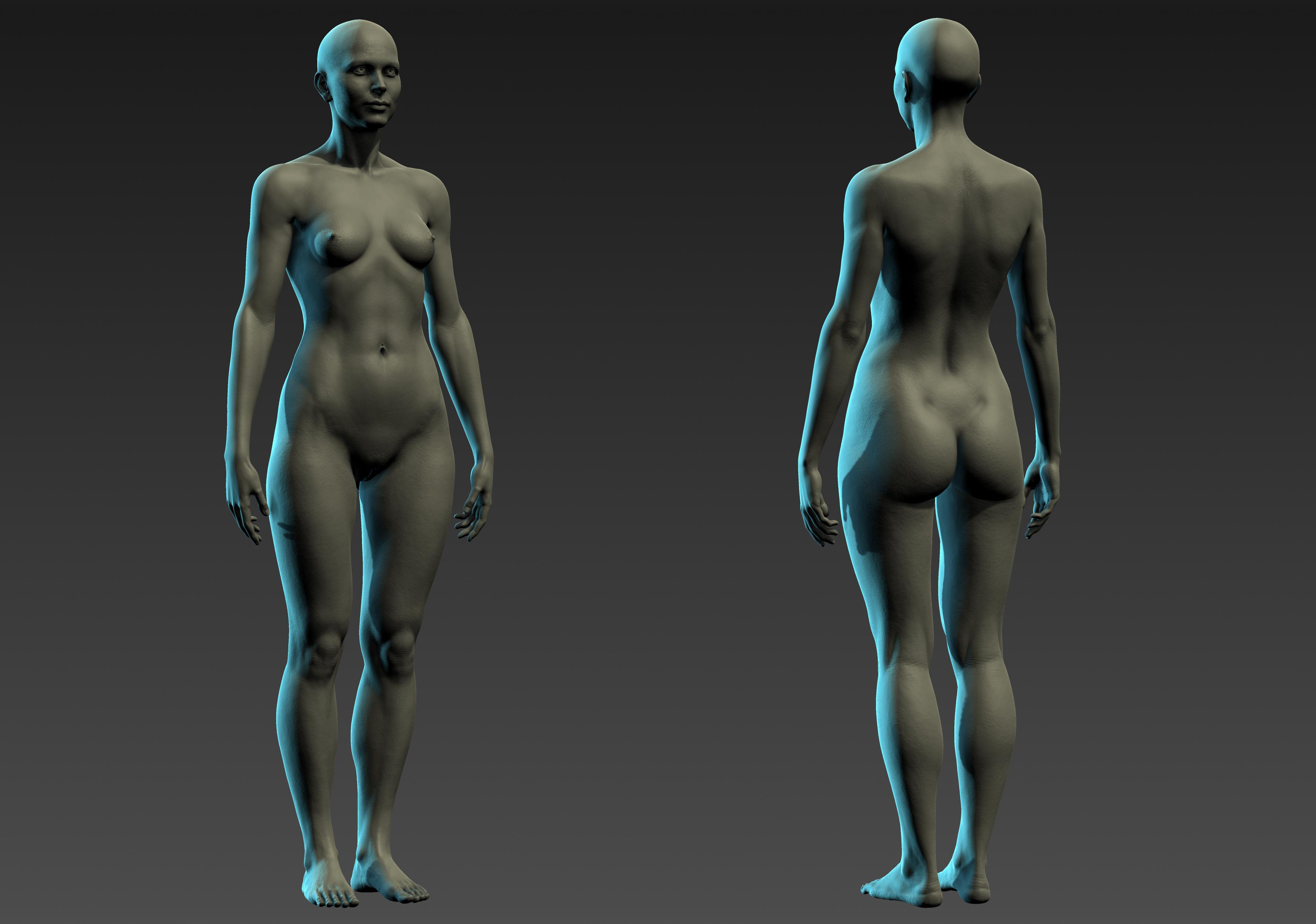 Female Anatomy Study (Warning Nudity) - Autodesk Community- Mudbox