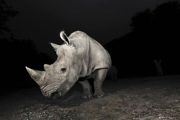 rhinoshutterstocksmall.jpg