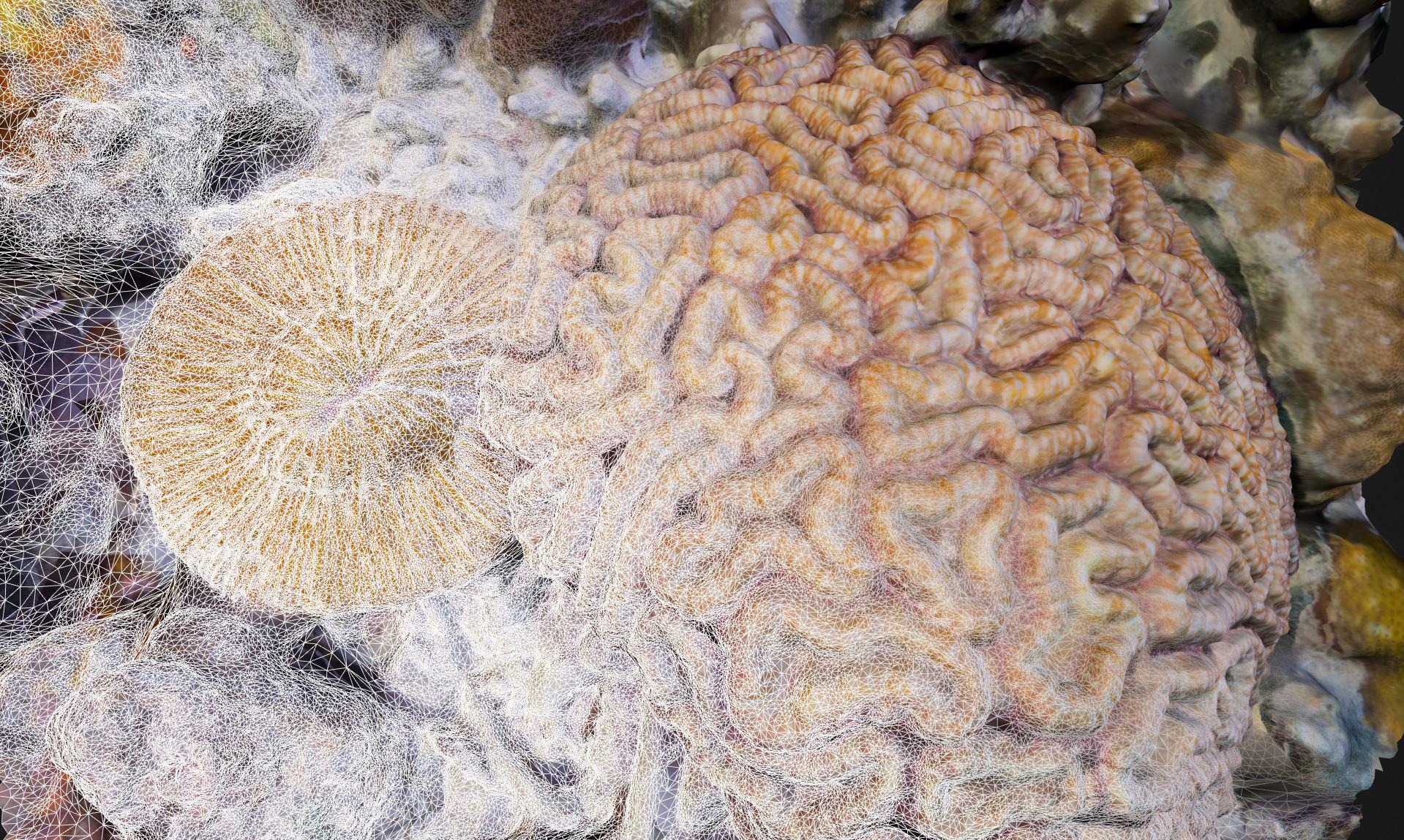UnderwaterPhotogrammetry-ConvertingUnderwaterImagsInto3DModels.jpg