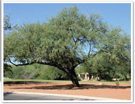 Solved: How to find and load native trees in Revit? - Autodesk